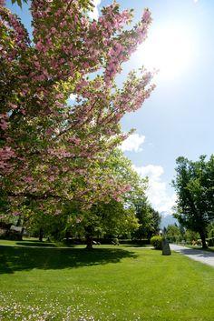 Gastein Bad Hofgastein Spring Flowers Kurpark Bad, Golf Courses, Spring, Winter Vacations, Summer Vacations, Hiking, Nature