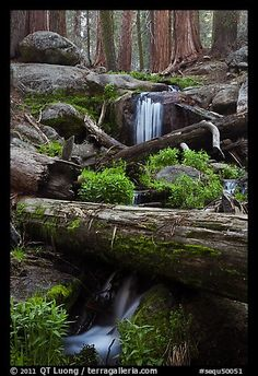 Cascading stream in sequoia forest. Sequoia National Park, California