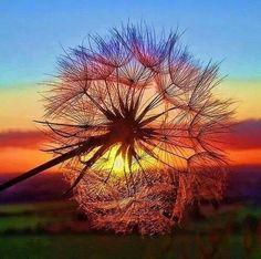 Image via We Heart It https://weheartit.com/entry/146590133 #amor #art #arte #live #love #naturaleza #paisaje #paz #peace #sol #sun #vida #tranquilidad