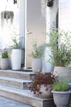 Thrilling About Container Gardening Ideas. Amazing All About Container Gardening Ideas. Outdoor Pots, Outdoor Gardens, Pot Jardin, Terrace Garden, Diy Garden Decor, Small Gardens, Porch Decorating, Dream Garden, Garden Inspiration