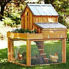 Coop with garden