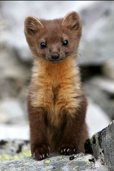 Google stoat right now.