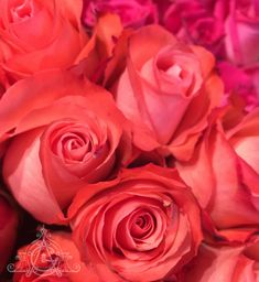The best days are when your only decision is which to choose. Good Day, Roses, Good Things, Flowers, Plants, Buen Dia, Good Morning, Hapy Day, Pink