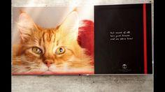 Photo book Simon the Cat