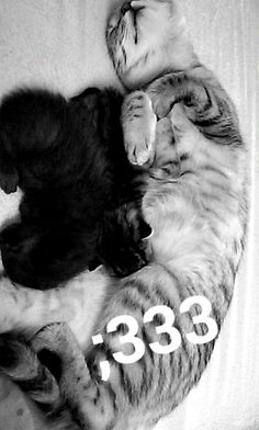 ;* #small #cats #sweet