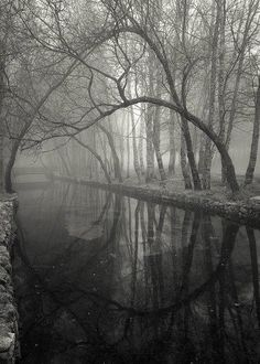 photography Black and White creepy b&w nature forest river vertical Beautiful World, Beautiful Places, Landscape Photography, Nature Photography, Dark Forest, Belle Photo, Pretty Pictures, Black And White Photography, Scenery