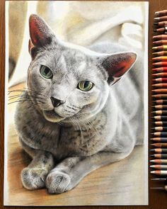 Hyperrealism, Photorealism, Realistic Cat Drawing, Hyperrealistic Drawing, Color Pencil Art, Japanese Artists, Cat Art, Pet Portraits, Colored Pencils