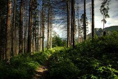 Tatry, Poland, Czarwone Valleys
