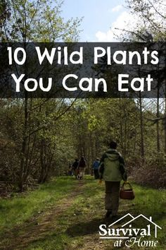 10 Wild Plants You Can Eat (Direct Link) - for all my adventures, since I'm always hungry ;)