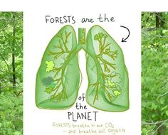 Care about the forest? Here's what you can do Forests are the lungs of the Earth Save Planet Earth, Save Our Earth, Save The Planet, Earth Day, Save Mother Earth, Earth Drawings, Forest Conservation, Save Environment, Healthy Environment