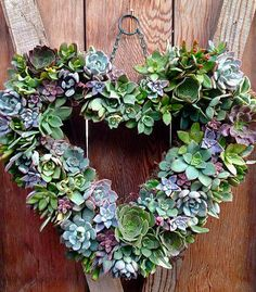 Succulent Heart Wreath // Windmill Floral and Garden Designs