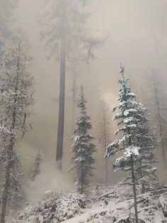 Snowy forest on fire. Beauty in the midst of destruction. Northern Washington [3264x2448] - Posted by: Notcreativeatall1