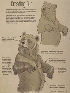 Marvelous Drawing Animals In The Zoo Ideas. Inconceivable Drawing Animals In The Zoo Ideas. Animal Sketches, Animal Drawings, Drawing Sketches, Art Drawings, Drawing Animals, Sketching, Bear Sketch, Bear Drawing, Drawing Fur