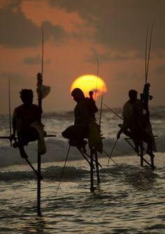 Stilt fishermen in Galle, Sri Lanka