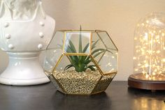 Hexagon Succulent Terrarium - Dream a Little Bigger