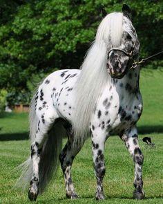 miniature ponies - Google Search