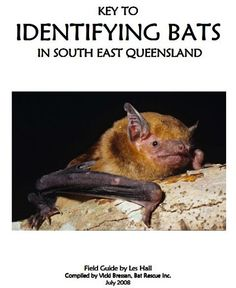 Bats, Facts and Facts about on Pinterest