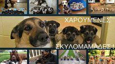 Χαρούμενες ...σκυλομαμάδες !