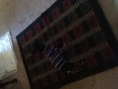 My devil dog !!!!