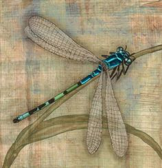 ...Beautiful Dragonfly.....