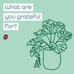 What are you grateful for? . . #gratitudeattitude #positiveenergy #positivity #stayhomesafe #stayhealthy #staysafe #thesecretapp #gratitudeapp #yoga #peace #lawofattraction #visualization #positivethinking #positivevibes #loa #positivethoughts #quotes #happiness #spiritual #instagood #gratitude #success #grateful #abundance #inspirational #themagic #vibration #spirituality #compassion #thesecretmovie