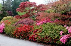 Different Types of Evergreen Hedges for an Enchanting Landscape