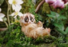 SOLD  Baby Slow Loris  Poseable Fantasy Art-Doll by RikerCreatures
