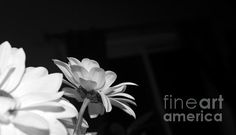 A black and white of a beautiful bouquet given to me.