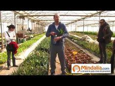 Consejos de cultivo en invernadero y permacultura, Dulce Revolución - YouTube