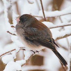 Attracting Birds in Winter | Rodale's Organic Life