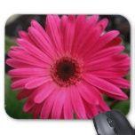 Pink Gerbera Daisy---design by Kay Novy, kkphoto1