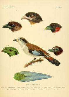 Genera avium by Wytsman, P. (Philogène) 1866-1925 - Biodiversity Heritage Library
