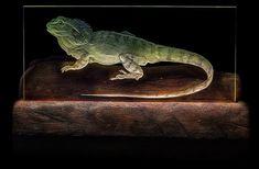Dragon Lizard glass engraving by Margotmay designs Engraving Tools, Glass Engraving, Silverpoint, Painting Gallery, Botanical Art, House Painting, Dragon, Stone, Design