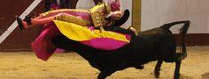 MAGESCQ Llenazo y variado encierro de Urcola  Clemente, oreja en el arranque del año en Francia - Mundotoro.com #Francia #toros #oreja