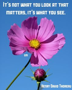 It's not what you look at that matters, it's what you see. Henry David Thoreau #wisewords #wisdom #look #looks #quote #matters #see #seethrough #you #quotes #beautyinnature #brainyquote #naturephotography #natureisbeauty #photography #flowers #cosmos #author #henrydavidthoreau #words #life #love #eyes #soul #beautyinfluencer #beautiful #beautyisintheeyeofthebeholder #meme #quoteof #encouragement