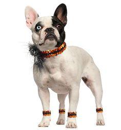 Para deixar o carnaval ainda mais divertido, nada melhor do que dar boas risadas com as fantasias para cachorro que vemos por aí.
