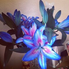 My beautiful bouquet of star gazer lilies. ❤️ My favourite flowers! Never seen blue ones before xxx