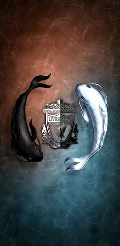 Dojo, Liverpool Fc, Soccer Players, Whale, Soccer, Football Players, Whales
