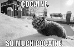 Google Image Result for http://gifsforum.com/images/meme/cats/grand/cocaine-cat-cats-eccbc87e4b5ce2fe28308fd9f2a7baf3-497.jpg