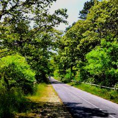 Cape Cod Bike Trail - Harwich, MA