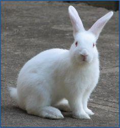 Conejos como mascotas para los niños