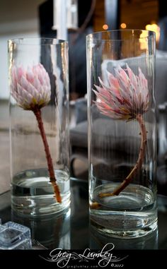 protea flower decor glasses at dollar tree for a dollar get fake flowers for a dollar, and get rocks to put at the bottom of glass. or use real flowers! South African Decor, African Theme, South African Weddings, Nigerian Weddings, Flor Protea, Protea Flower, Protea Wedding, Wedding Flowers, Protea Centerpiece