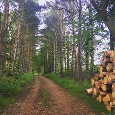 Binning Woods, East Lothian - Scotland.