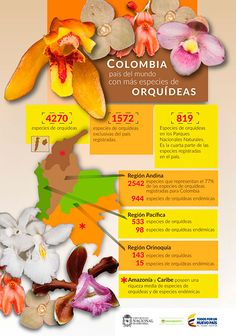 06 orquideas Orchids, Flora, Fruit, Twitter, Maps, Environment, Colombia Map, Countries Of The World, Plants