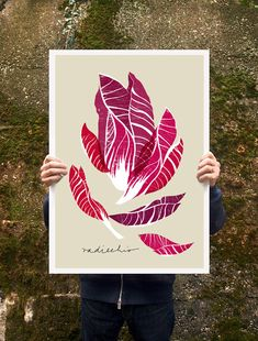 Radicchio...what a beauty.      20 x 27 /50x70 cm/ archival fine art giclée reproduction print on beautiful white Hahnemuhle Photo Rag 276 g Paper - genuine