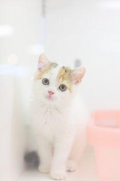 Innocent Kitten