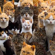 @TIME photo editors share 50 astonishing animal shots of 2015 including this image of cats crowding the harbor on Aoshima Island in the Ehime prefecture in southern Japan. An army of cats rules the remote island curling up in abandoned houses or strutting about in a fishing village that is overrun with felines outnumbering humans six to one.  Photograph taken on Feb. 25 2015 by Thomas Peter@reuters. See more animal pictures at lightbox.time.com. #cats #japan by time