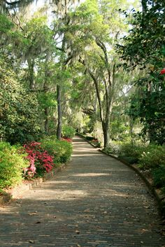 Path within Maclay Gardens
