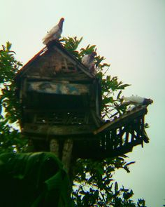 Kabootar ghar  #pigeonhouse #dovecote