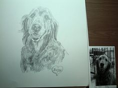 ' Original Portrait Pencil of your pet ' is going up for auction at  4pm Sun, Apr 14 with a starting bid of $25.